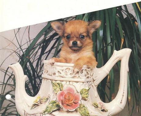 Chihuahua Stocklist
