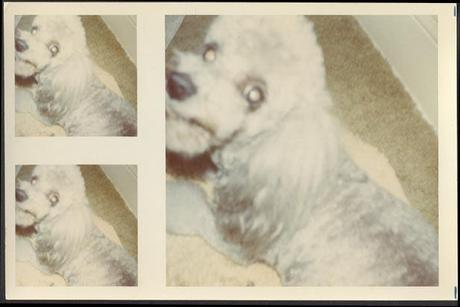 My collection of dog picture