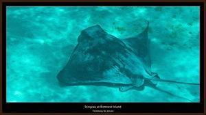 underwater-ray
