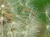 Highly Unusual Allergies