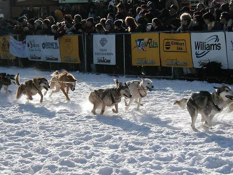 Rookie Musher Wins 2011 Yukon Quest Sled Dog Race