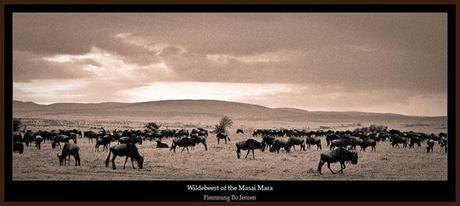 africa-wildebeest
