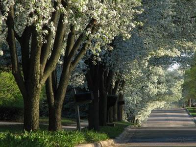 Spiritual Walking