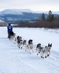2011 Iditarod: Buser Leads Into Nikolai