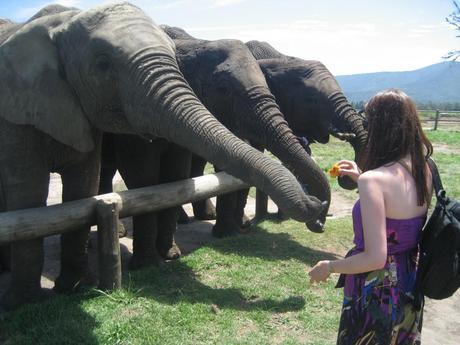 South African honeymoon