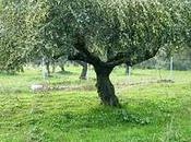 Greek Lamb Stifado