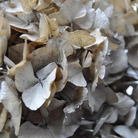 Dried hydrangea and getting experimental!
