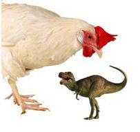 Chicken Is Tyrannosaurus Rex's Closes Living Relative