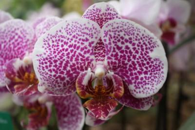 Orchids and Ikebana Art