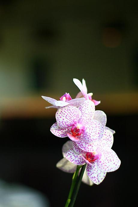 Lovely orchids at the wedding