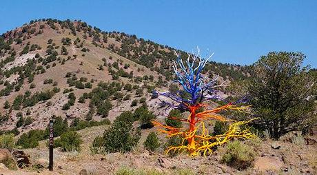 Painted Trees In The Mountains Of Colorado