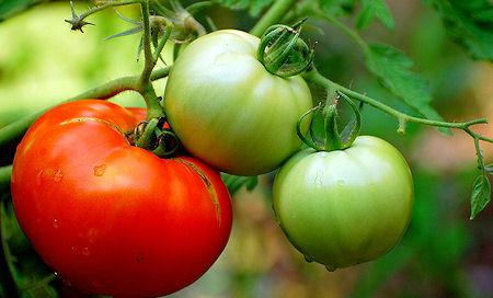 10 Everyday Fruits And Vegetables That Are Poisonous