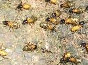 Featured Animal: Termite