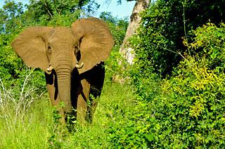 South African Safari In Kruger National Park