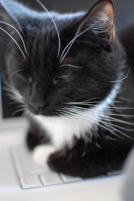 Cat vs. Computer