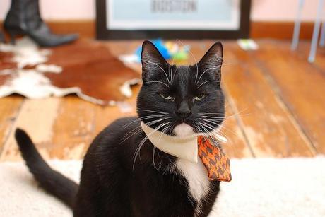 Chloe cat wants her TPS reports