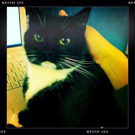 Chloe cat