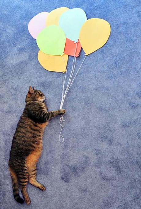 cat photography balloon construction paper