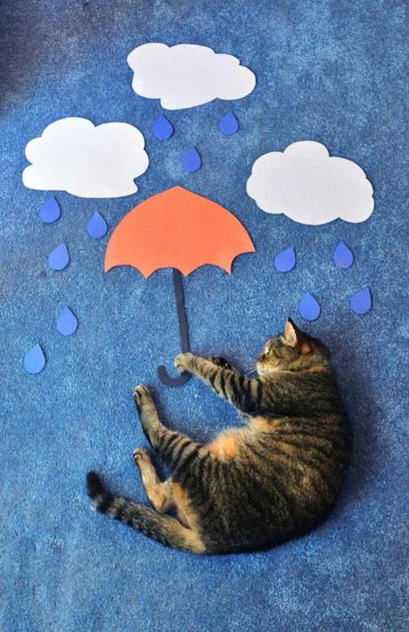 cat photography umbrella construction paper