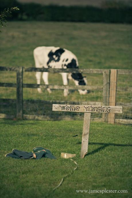 This cow is stood in the wrong place entirely