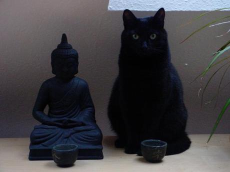 Buddha Cats: The Spirituality of Animals