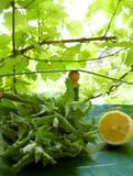 Home-Blended Healing Herbal Tea Recipes