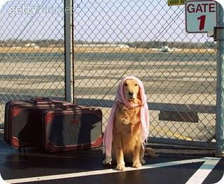 Bringing Your Pet Abroad?