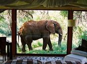 Room with View: Makanyane Safari Lodge, South Africa