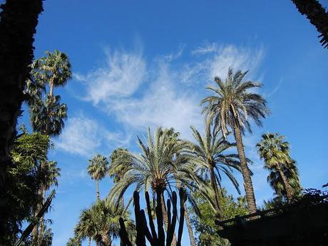 At the Jardin Majorelle/Friday