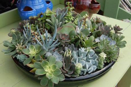 Some cools shots of the succulents we saw at Baker's Acres...