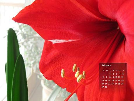 02-11 Amaryllis Wallpaper 1024x768