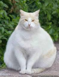 How to Prevent Pet Obesity