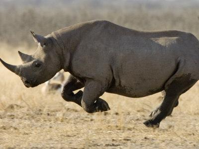 Rhino activist honoured