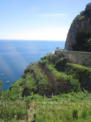 Turquoise ocean and vineyards on cliffs - the amazingly stunning Amalfi coast
