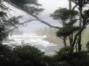 Wild Pacific Trail Photo