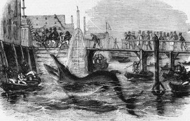 A Deptford whale