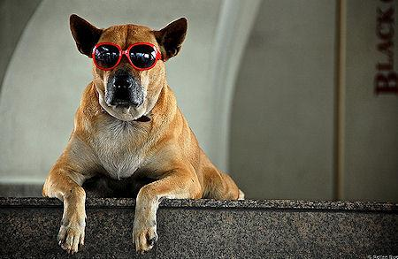Dogs In Shades