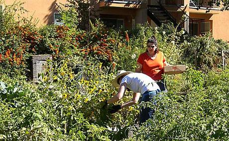Sharing Backyards via Wasatch Community Gardens