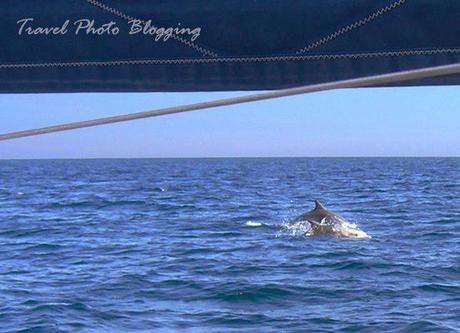 Dolphin encounter in Croatia