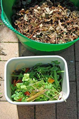 Compost harvest time