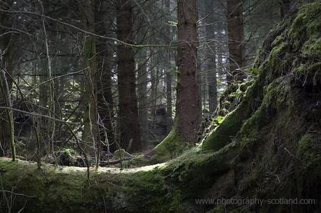 Sunlight in the forrest near Loch Ard in the Trossachs