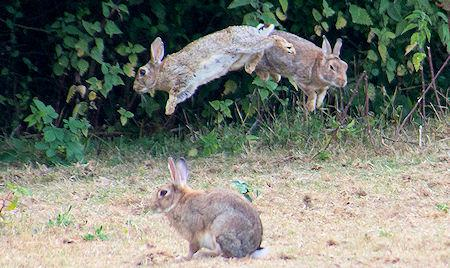 Easter Bunnies - Jumpin', Leapin', Bouncin'