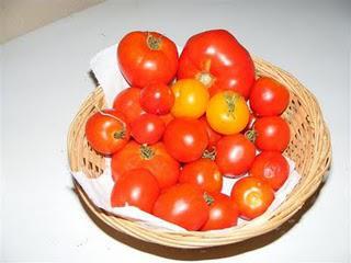 2011 Tomato Review