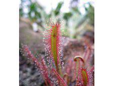 Wonders Carnivorous Plants