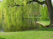 Springtime Boston's Public Garden