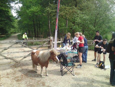 Pony Express - New Forest 2011