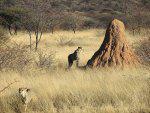 Namibian Termite Mound