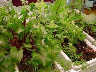 Family Garden Tips ... from Montana Team Nutrition