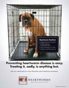 Shortage of Drug Used to Treat Heartworm Disease