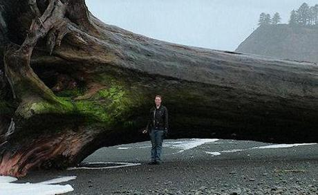 Massive Piece Of Driftwood Washed Ashore